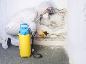 mold-remediation-nyc